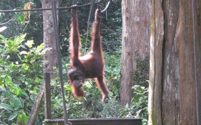 Back to Borneo